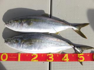 200810-1.jpg