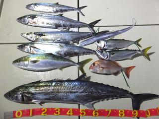 201220-2サワラ118cm清水さん.jpg